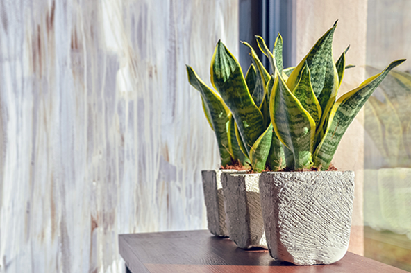 best houseplants in apartment homes